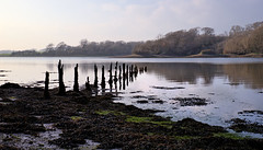 Nice walk (againandagain251) Tags: cleddauriver cleddauestuary lawrenny pembrokeshire pembrokeshirenationalpark westwales river sticks oldlandingstage seaweed mud calmwater reflections
