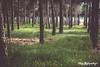 🌿 Nature (silvia_photog) Tags: nature mothernature tree trees travel spain