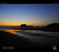 Distant Sun (tomraven) Tags: sun sea sky island reflections light seagull gull dancinggull tomraven aravenimage coast coastal landscape clouds sunset q12018 olympus penf