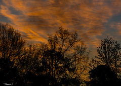 Trepidation (that_damn_duck) Tags: nikon nature clouds cloud sunset sundown tree trees dusk