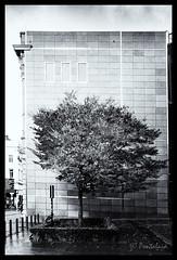 2017-11-12-Bruxelles-GPS4cam-39-2.2-Pt (Pontalain) Tags: bruxelles alonesolitary arbre baum bw city ciudad einsameeinzige nb rbol seulsolitaire stadt s㬯solitario tree ville sólosolitario belgique be 単独で孤独で 都市を木に追い上げてください