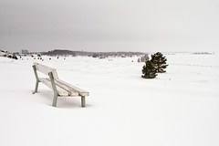 View To The Sea (k009034) Tags: 500px bothian bay copy space finland kalajoki scandinavia tranquil scene beach bench buildings cold coldness frost ice iron pine sea seasons seat shore snow snowfall storm travel destinations trees weather white winter horizon over water teamcanon