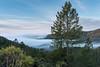 Coastal California (Matt McLean) Tags: bayarea california fog landscape marin morning tree valley