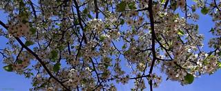 Primavera en Madrid.