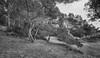 (193/18) Macarella en bn (Pablo Arias) Tags: pabloarias photoshop photomatix capturenxd españa árbol hierba bosque paisaje cala macarellamenorca