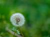 Helios 44-2 58mm (Michael_G224) Tags: helios 442 macro nature flowers bokeh
