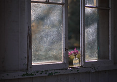 Spring on a windowsill (V Photography and Art) Tags: window windowsill heather pink spring flowers light morning sunlight backlit glass pinkheather bottle framing composition