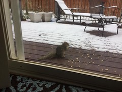 April 21, 2018 - This squirrel doesn't mind the snow. (Ginger Riley)