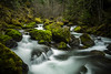 Willamette Natioinal Forest, OR (Eric DeBord) Tags: temperaterainforest 6d moss naturallight oregon waterfall nw forest water creek northwest willamettenationalforest cascademountains nature canontse24mmf35lii canon