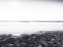 Seaweed & Sandbank (Novocastria Photography) Tags: select lindisfarne holyisland sea seaside coast rock rocks sand tide outgoingtide vintagephotograph newcastlechronicle northernecho