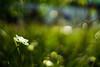 Breathe (Daniela Romanesi) Tags: 3999 moreia vintagelens carlzeiss 50mm f14 planar green verde garden jardim jardinagem fineart artenaparede moldura frame natureza natural nature texture brisa frescor flower aoarlivre profundidadedecampo morea