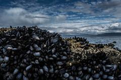 Comunidad (agustintolino) Tags: tdf argentina nikkon d5200 almejas clams