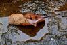 Outono (Ruby Ferreira ®) Tags: leaf folha autumn outono rain chuva