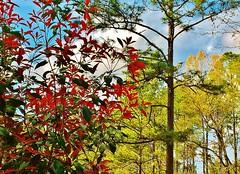 Spring Is at Work in Falling Waters, Chipley, Florida (Olin Gilbert) Tags: chipleyflorida thefloridapanhandle emeraldcoast thesunshinestate washingtoncountyflorida fallingwaters awardtree