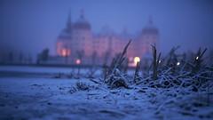 LAST SNOW (CUMBUGO) Tags: moritzburg light blue hour germany snow snowing mood color evening nature lamp bokeh castle nikon d800 d800e sigma art f14 low lake ice frozen