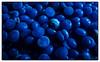 Macro Mondays: The Blues (hammer.adrienn) Tags: monday macro blue theblues macromondays