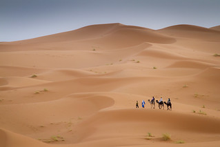 On the move in the Sahara desert near Erg Chebbi, Morocco