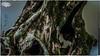 009/365 - Tree Trunk Over Flood Runoff (4k) (RWGJ) Tags: 169 16x9 4k 70200mmf28 afternoon aqua artisticborder artisticframe bark black blue branch brown chichesterriver color colour cyan d4s dslr day daytime duncanpark firecrestnd3010stop formatthitech gray green hd horizontal landscape leaf leaves longexposurephotography moss naturephotography nikon nikond4s orange outdoor park sigma sigma70200mmf28 summer treebranch treetrunk trunk twig uhd ultrahighdefinition urbanpark wallpaper wallpaper169 water white bandongrove newsouthwales australia au
