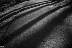 """Shadows on the path <a style=""""margin-left:10px; font-size:0.8em;"""" href=""""http://www.flickr.com/photos/115618485@N06/40179940654/"""" target=""""_blank"""">@flickr</a>"""