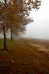 Seasonal Transition (rdodson76) Tags: autumn fall season seasonal seasons tree trees grass weeds meadow field fog weather climatechange nature natural missouri leaves color warmcolors cool cold environment habitat foggy day transition landscape outside sunrise dawn morning
