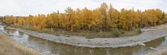 Autumn lineup (bichane) Tags: autumn fall colour jumpingpoundcreek cochrane alberta creek water trees panorama