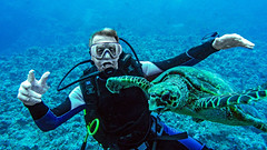 wonderful life (werner boehm *) Tags: wernerboehm scubadiving turtle schildkröte redsea egypt padi