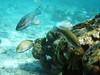 Fonds sous-marins de CUBA (francisaubry) Tags: cuba plongée diving sony
