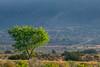 tree near Indian Service Rte 74 (johngpt) Tags: trees fujinonxf55200mmf3548rlmois tree newmexico mist viewtowardjemezreservoir viewtowardsantaanamesa fujifilmxt1 places viewtowardjemezriverfromus550 unitedstates us treemendoustuesday htmt