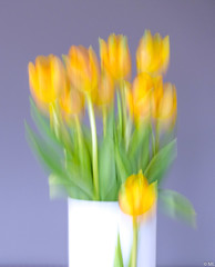 Creative with Tulips (Martine Lambrechts) Tags: creative with tulips still life abstract