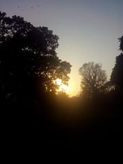 Sunset behind Trees (zohaibusmann) Tags: sunset sunsetfans sunsetlovers beautifulsunset sunsetting sunsetbehindtrees sunissetting eveningglory eveningsunshine sunsetoftheday treesandsunset loveofsunset sunsettime ngc zohaibusmanphotography poshe550