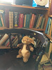 bunny in The Chapel, Broadstairs (looper23) Tags: chapel book books pub broadstairs kent april 2018