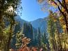 Voyage à Kings Canyon (Seb770) Tags: iphone travel voyage colors couleurs trek roadtrip paysages joli beau beautiful forest forêt landscape america etatsunis usa