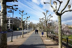 Main riverside, Frankfurt (oxford park) Tags: mainufer main riverside frankfurt