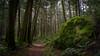 100 Acre Wood 04 (ScottyBgood) Tags: scottyandronnyshow britishcolumbia 100acrewoods vancouverisland