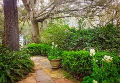 Cobblestone path at Bellingrath Gardens (CarmenSisson) Tags: alabama bellingrathgardens gulfcoast theodore flowers gardens outside tourism touristattractions