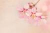 Annonciatrice du printemps (Astrid Deschenes) Tags: long island planting fields arboretum d7100 nikon fleur flower macro printemps spring