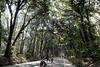 20180404 path to Meiji Jingu (chromewaves) Tags: fujifilm xf xt20 1855mm f284 r lm ois tokyo japan harajuku yoyogi park meiji jingu shrine