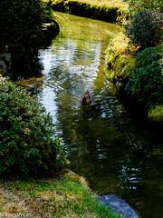 城南宮 (konomon) Tags: しだれ梅 jonangu 城南宮
