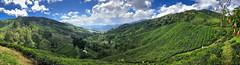 BOH Tea Plantation, Cameron Highlands (hathaway_m) Tags: ipoh malaysia tea cameronhighlands