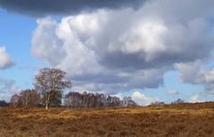 New Forest NP, Hampshire, England (east med wanderer) Tags: heath england hampshire uk clouds newforestnationalpark nationalpark bracken heather silverbirch