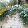 Fiorellini (PhoebeZu) Tags: flowers fiori littleflower fiorellini yellow yellowflowers white whiteflowers liliac liliacflowers