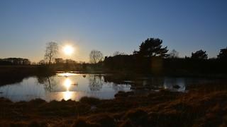 kurz vor Sonnenuntergang im Moor /  just before sunset in moorland
