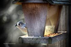 Really Fast Bird (Photographybyjw) Tags: reallyfastbirdnicemorning pleasanttemperaturesbrightsun birdseverywhere thisisalligot oneveryfastbird hewasinandoutinnotime betterlucknexttiebutthebirdfeederisfixed
