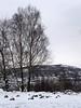 20180318-142530 (aderixon) Tags: naturelandscapehill natureplanttree natureweathersnow pontypridd midglamorgan walesuk nature snow weather