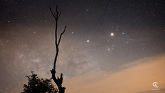 Conjuction of Mars, Antares and Saturn (Christophe_A) Tags: milkyway night sky nikon sony a7s sigma 35mm art sigma35art f14 greece nightscape stars galaxy tree silhouette conjuction antares mars saturn planets timelapse keeplookingup christopheanagnostopoulos christophe wwwchristopheanagnocom astrometrydotnet:id=nova2530515 astrometrydotnet:status=solved