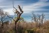 610_2411-Edit (rskim119) Tags: nikon nature landscape san joaquin river national wildlife refuge tree limb