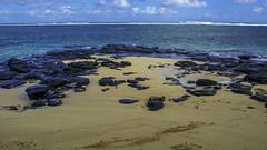 Hawaii USA - Kauai Island. Hanalei Beach. Lava rocks on the beach. (Feridun F. Alkaya) Tags: lava hawaii kauaiisland wailuafalls kauaisspirit forest waimeacanyonstatepark waimea waimeacanyon hawaiiisland ngc landscape canyon road kauaı grass soil aloha hanaleibeach hanalei usa worldheritagelist unescoheritagelist unesco unc kohala mauna hualalai kilauea volcanos garden sky flower honolulu waikikibeach beach