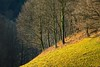 IMG_5291 (Bartek Rozanski) Tags: badenwurtemberg oberried schwarzwald germany blackforest deutschland mountains winter hochschwarzwald
