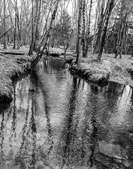 Woodland Brook Reflections (John Kocijanski) Tags: spring landscape brook stream water reflections blackandwhite trees forest woodland canong15 nature sullivancounty