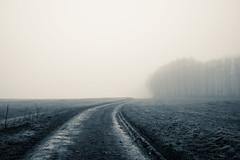 Perfekt (Explored) (Ronny-1976) Tags: grosfeldamücke landschaft landwirtschaft lutherweg nebel wald wege
